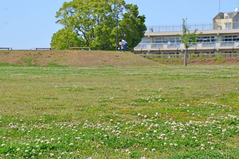 木下交流の杜広場の芝生