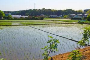 本埜村の田園風景
