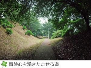印旛沼公園のうっそうとした樹のトンネル