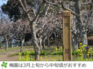 印旛沼公園の梅園