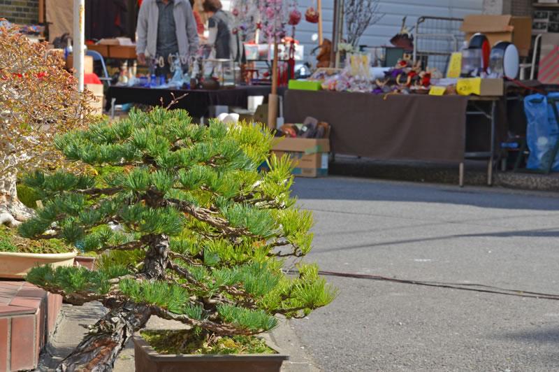 木下の骨董市で売られている盆栽