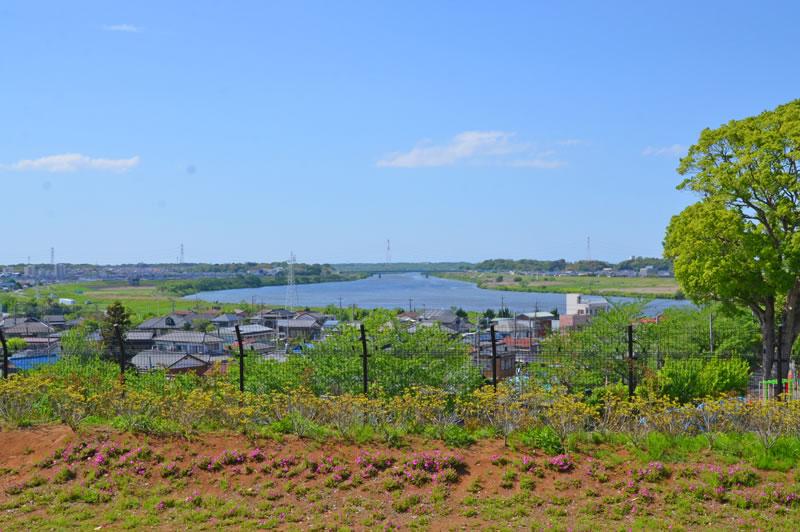 木下万葉公園から利根川を見下ろす