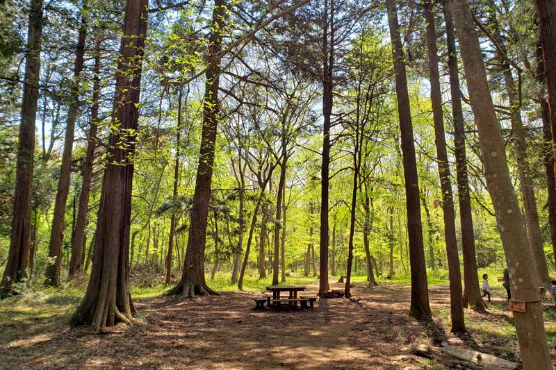 草深の森の木のベンチ