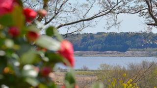 印旛沼公園から印旛沼を見下ろす