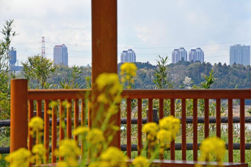 印旛沼公園からユーカリが丘を観る
