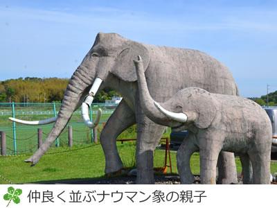 双子公園のナウマン象の親子