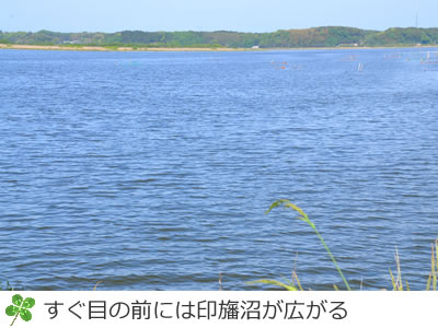 すぐ隣は印旛沼が広がる
