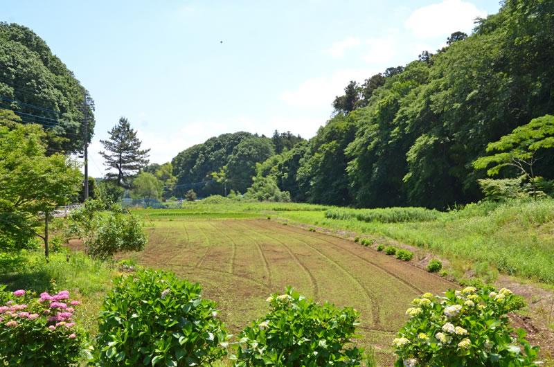 結縁寺近くの里山の風景