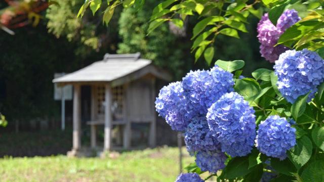 結縁寺付近の池とあじさいの風景