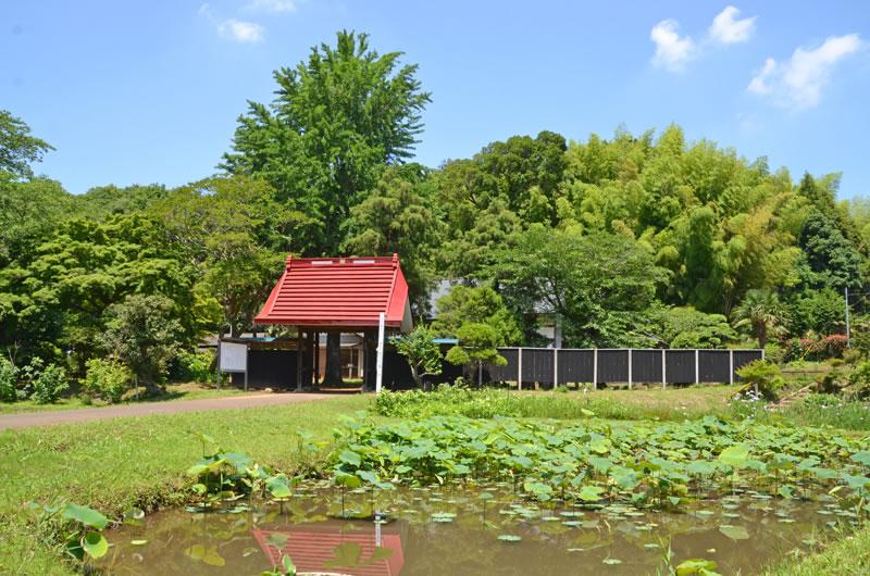 結縁寺の蓮池