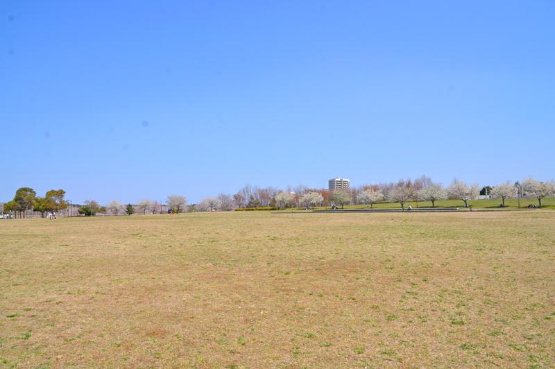 牧の原公園の芝生