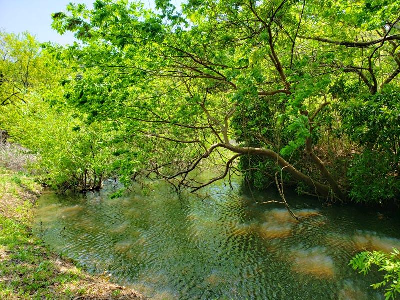 印西市の山崎池