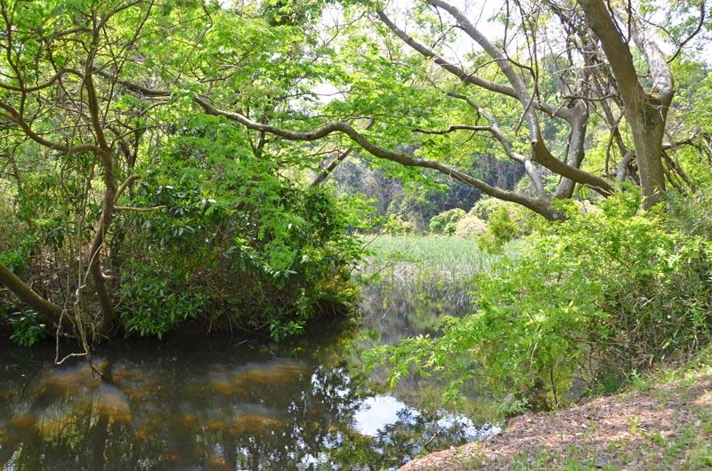 木下竹袋の秘境山崎池