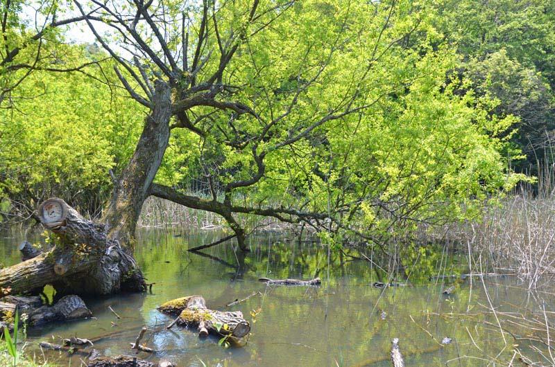 木下竹袋の秘境「山崎池」