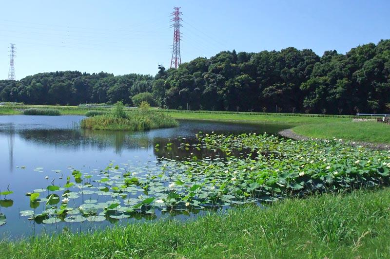 ひょうたん島池の蓮の花