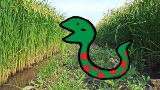 里山の蛇について