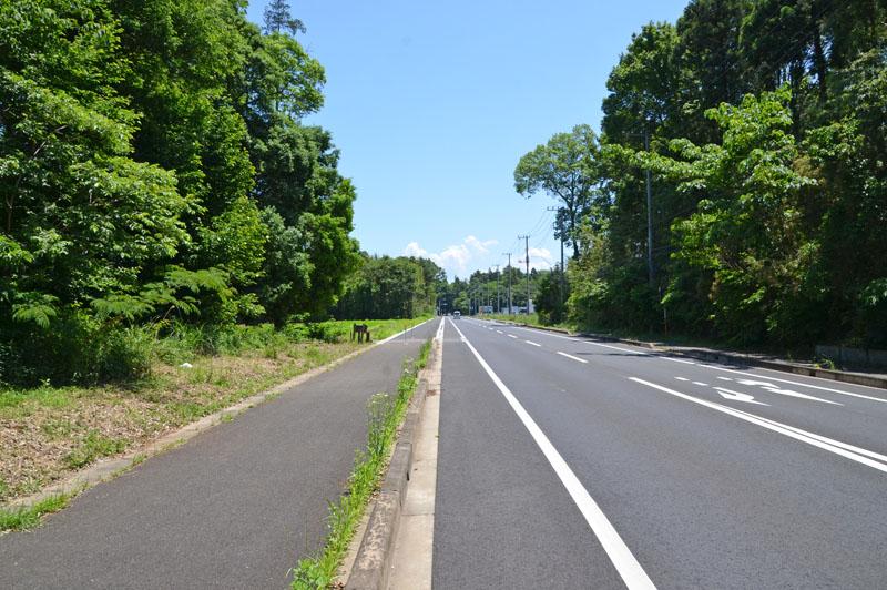 草深の森の前の道路